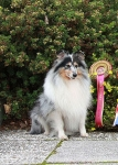 sheltie-graf.ru. European dog show 2010, Словения, 30.09-03.10